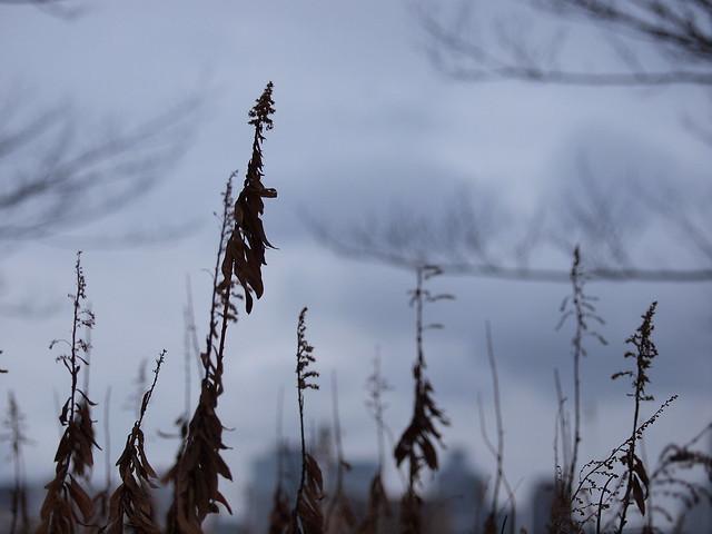 Dried‐up grass