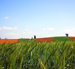 Spring (luisa_m_c_m_cruz) Tags: road trees red green portugal nature corn farm stripes land agro