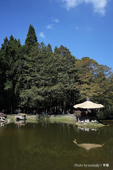 2011阿里山櫻花季晴天版23