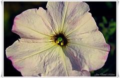 "In the Garden (thevisualeffect.com (JD Malave)) Tags: flower garden outdoors ""solofotos"""