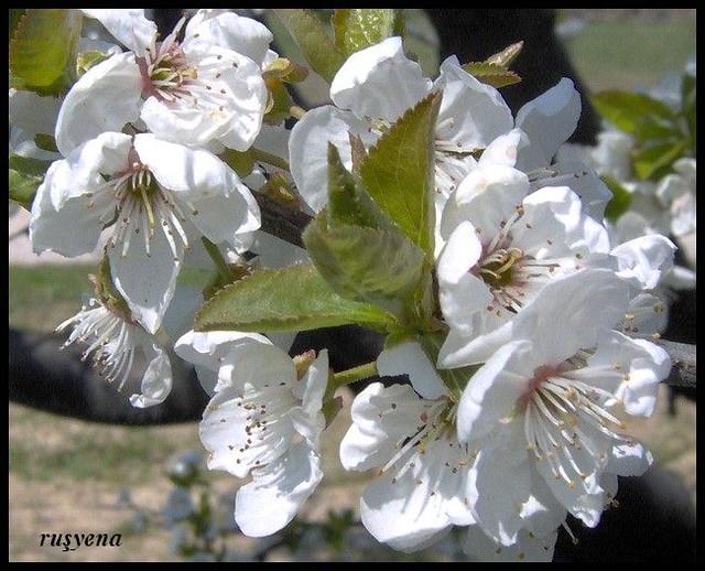 bahar çiçekleri 3