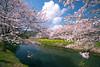 那珂川の桜・Riverside Cherry-Tree02 (-TommyTsutsui- [nextBlessing]) Tags: pink sky nature japan river cherry landscape spring nikon blossom 桜 izu 春 伊豆 川 matsuzaki sigma1020 松崎町 onsalegettyimages