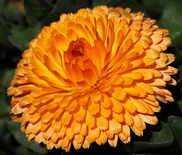 IMAGE: http://farm6.static.flickr.com/5182/5605724576_dd09362904_z.jpg