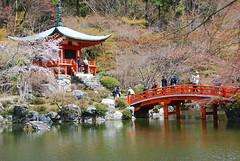 DSC_0530 (yhshangkuan) Tags: japan spring kyoto blossom bloom  cherryblossom sakura  fullbloom  2011 daigoji