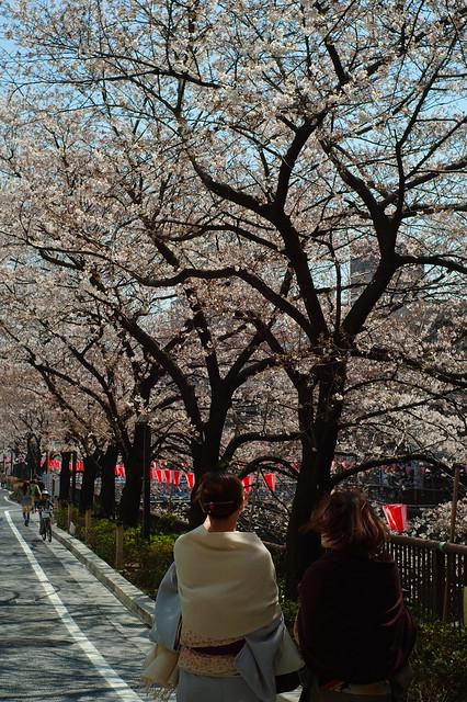 川沿いの春景色