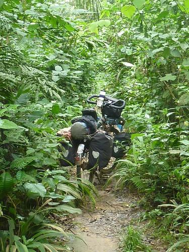 Jungle track to Ubundu
