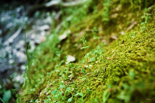 Naturaleza a pequeña escala