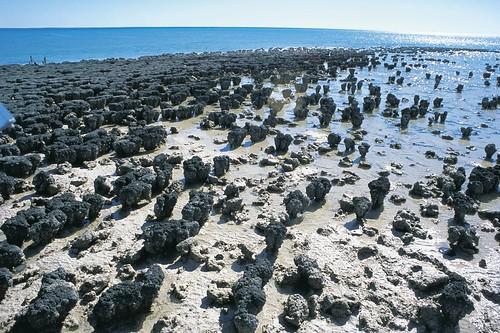 002662-786 Stromatolites.jpg