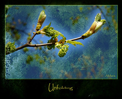 Unfolding (Mara ~earth light~) Tags: texture nature photoshop spring expression touch creativecommons magicalmoments ourtime unfolding simplybeautiful callingallangels contemporaryartsociety fantasticnature treesdiestandingup photographymypassion mara~earthlight~ abokehoflight untouchabledream lovelymotherearth healinglightofthespirit