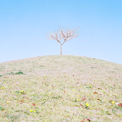 guardian angel (**sirop) Tags: temp people nature sadness spring solitude loneliness humanity kodak iso400 pastel hill joy kodakportra400vc human guardianangel strength kindness stories endurance portra familiar persevere personification midiumformat endure squair constancy primalscene hardiness universality dropsnote usualplace