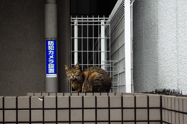 Today's Cat@2011-04-22