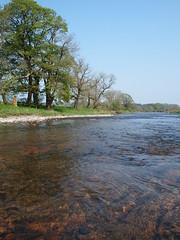 A Walk In The River Annan [26] (Sara Simmons Photography) Tags: camping trees tree water river landscape scotland salmon campsite hoddomcastle riverannan powfootbeach hoddomandkinmountestates