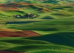 dream farmer (Anne Strickland) Tags: farmland rollinghills greenhills palousehills steptoebutte washingtonstateusa pullmanwashington hillsandvalleys undulatinghills beautifulfarmland palousefarm