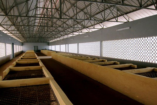 fish drying room
