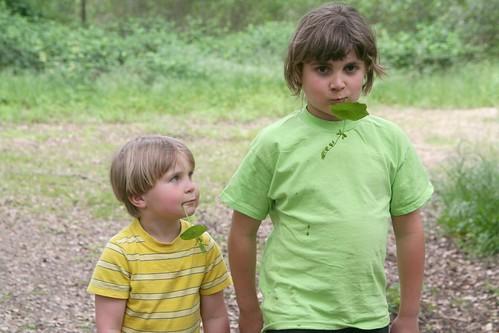 Miners' Lettuce Boys