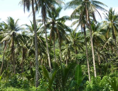 Mindoro-Sabang-Calapan (7)