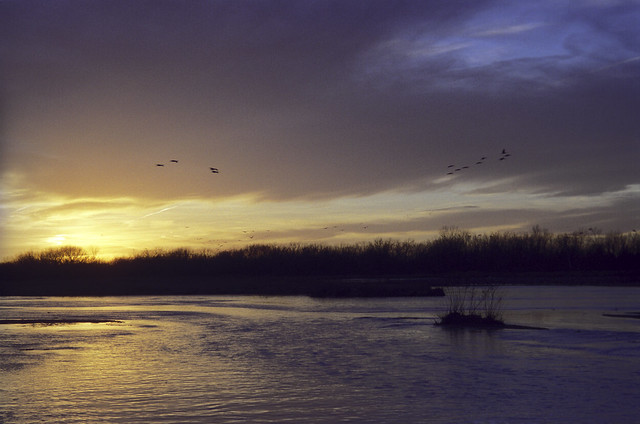 2003 Thede - Nebraska Cranes, Blizzard