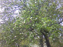 Newton's apple 1