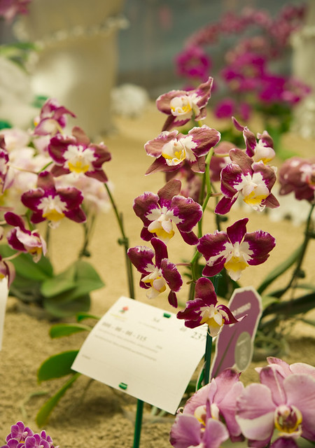 Цветочная выставка в Генуе 14