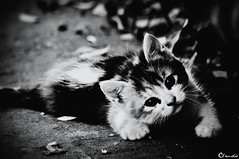 -M-I-A-O- (dClaudio [homofugit]) Tags: light bw pet cat garden nice nikon pussy d90 lillte mygearandme