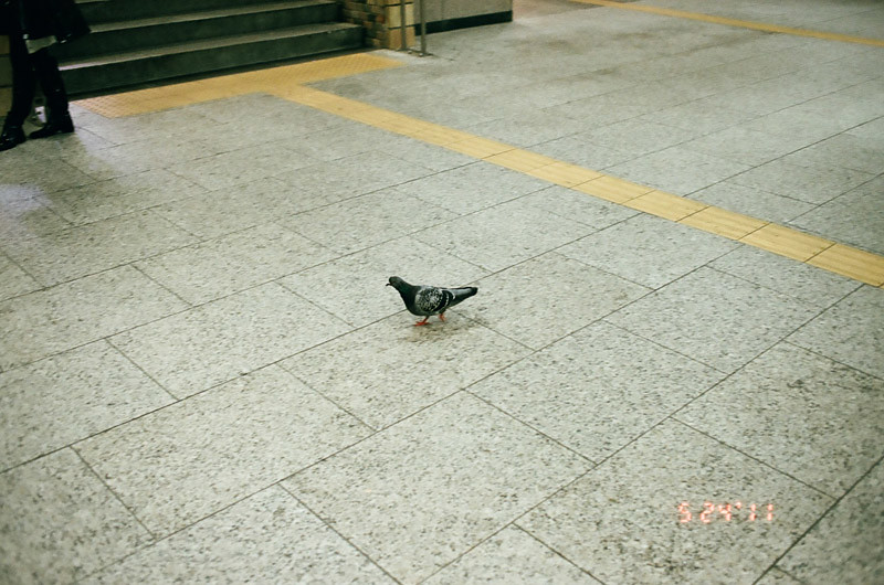 PigeonShinjukuStation (6 of 13)