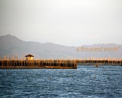 Laguna de Bay fish pens (Renato S. Orayani) Tags: lake photography philippines laguna lagunadebay metromanila athousandwords reni fishpen muntinglupa orayani renatoorayani reniorayani legazpisundaymarket baklad