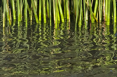 "DSC8671 (Tomas Brugger) Tags: brazil verde water colors beautiful look brasil rural wow photo flickr foto image action natureza tomas beleza fotografia riograndedosul imagem selvagem espm criativa brugger creativ d700 flickraward nikond700 nikonflickraward flickrunitedaward ""flickraward5"" ""flickrawardgallery"""