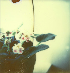 PX680 test film: Violets