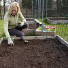 Woman planting out broccoli plants in square foot garden (!.Keesssss.!) Tags: people nature netherlands fence square outdoors photography day sitting adult gardening container growth dirt care adultsonly planting oneperson gettyimages beginnings gelderland blondhair casualclothing colorimage onewomanonly rightsmanaged matureadult threequarterlength onlywomen onematurewomanonly protectiveglove 5054years theflickrcollection keessmans 154ksgetty gettyimagesbeneluxq2