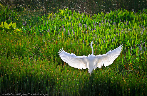 Graceful Landing_MG_3454 by Against The Wind Images