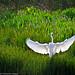 Graceful Landing_MG_3454
