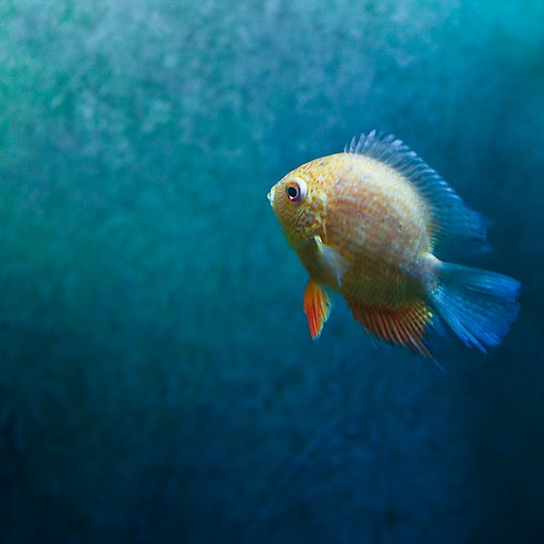 Fish by ►CubaGallery