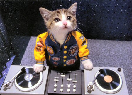 kitty dj