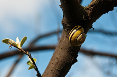 Pause (koDesign) Tags: nikon ast basel schnecke baum d300 botanischergarten nikkor2470f28