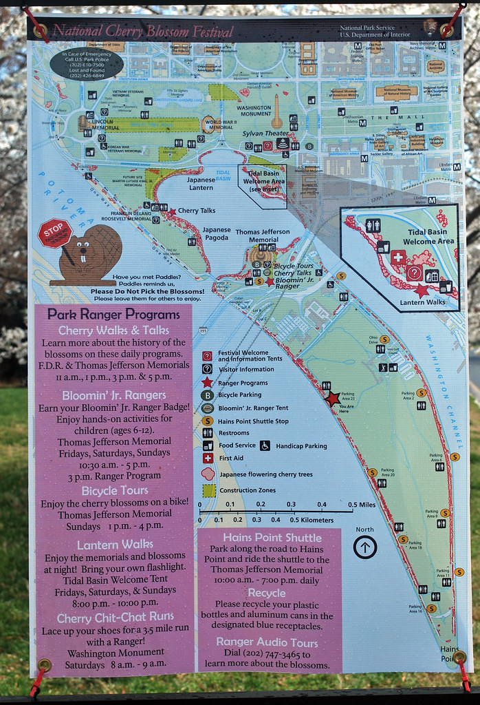 Cherry Blossom Map