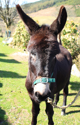 The other donkey