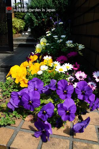 spring-in-tokyo-12