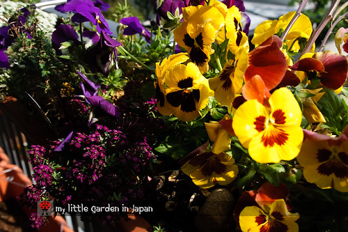 My-little-garden-in-Japan-April-2011-5