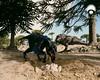 UNENLAGIA en el nido del gigantosaurio