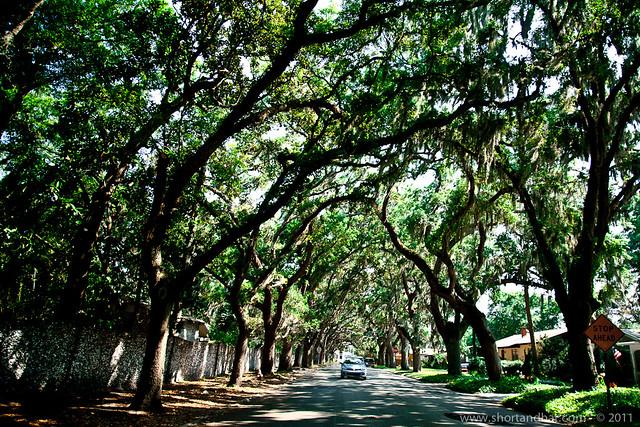 Magnolia Street