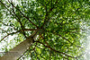 Under the Tree (Shayanthan) Tags: nature silent delight