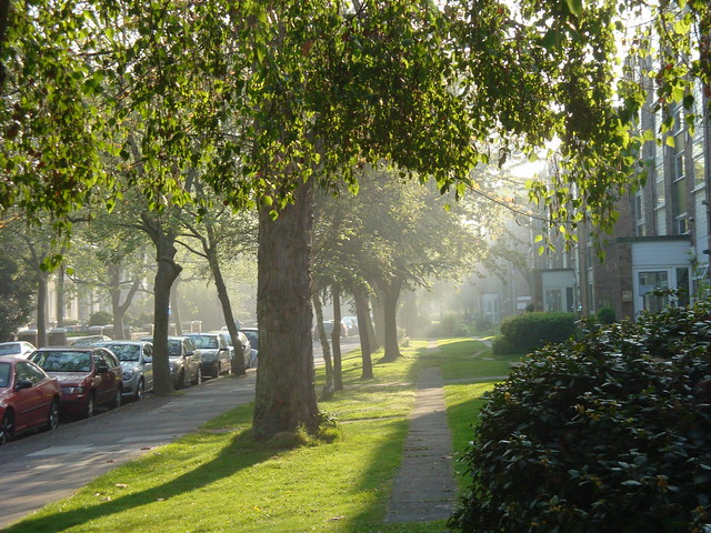 Mist in the morning 023