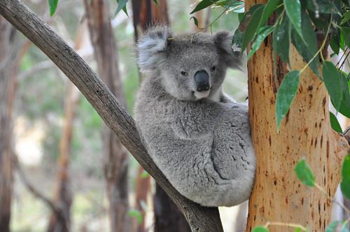 Australia (30 of 308)