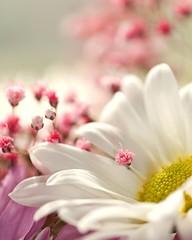 Happy Easter (ICT_photo) Tags: flower macro easter 28 tamron 90 ictphoto ianthomasguelphontario