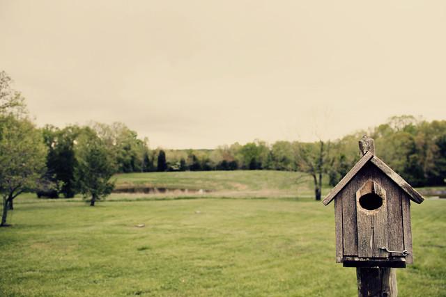 Week 17: Rural