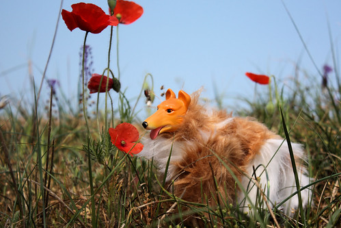 Über-Dog of Awesomeness Vs. The Poppies