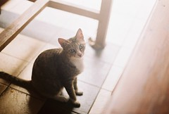 cihapit cat (yttria.ariwahjoedi) Tags: light film analog cat canon ae1 superia 200 bandung pasar kucing fujicolor cihapit