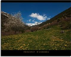 El Serrat (Principat d'Andorra) (kike.matas) Tags: flores primavera nature canon sigma paisaje colores andorra andorre ordino kartpostal canoneos50d prin