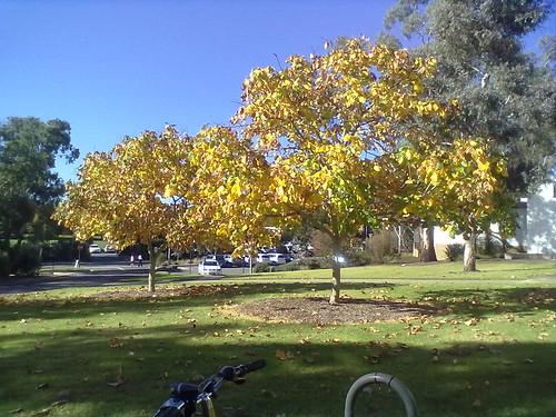 Autumn ANU 2