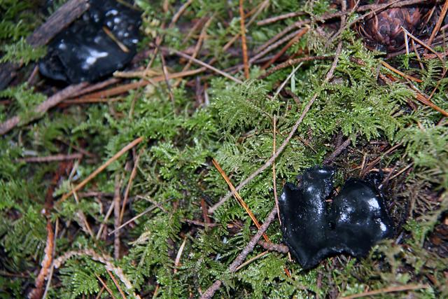 IMG_3585 black fungus